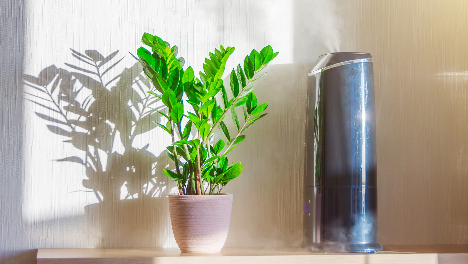 why you need a humidifier in colorado